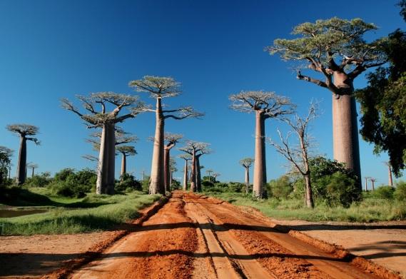 Allee-Baobab-03